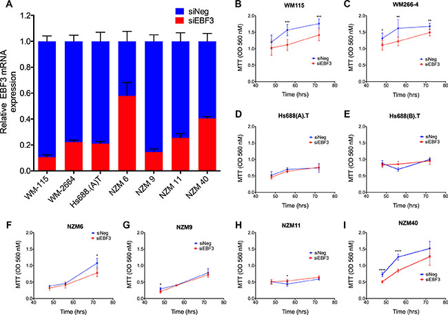 siRNA knockdown efficiencies and MTT assays for eight melanoma cell lines before and after EBF3 knockdown.