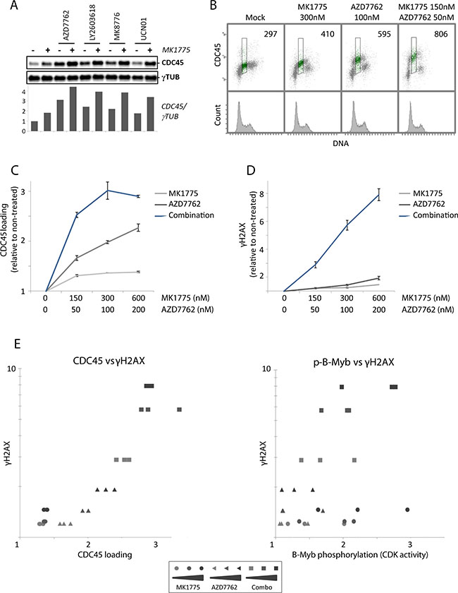 Loading of the replication initiation factor CDC45 after Wee1 inhibition is restrained by Chk1.
