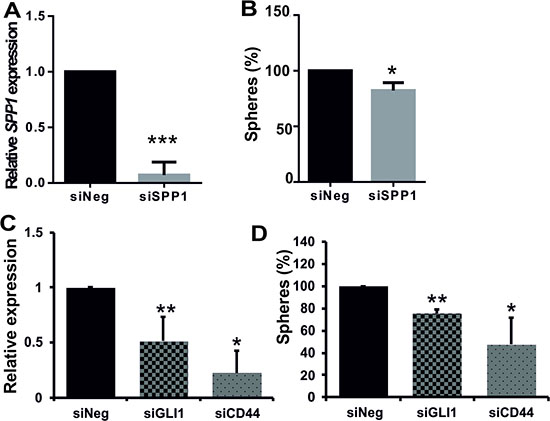 Efficient knockdown of SPP1 expression in glioma cells reduces sphere formation.