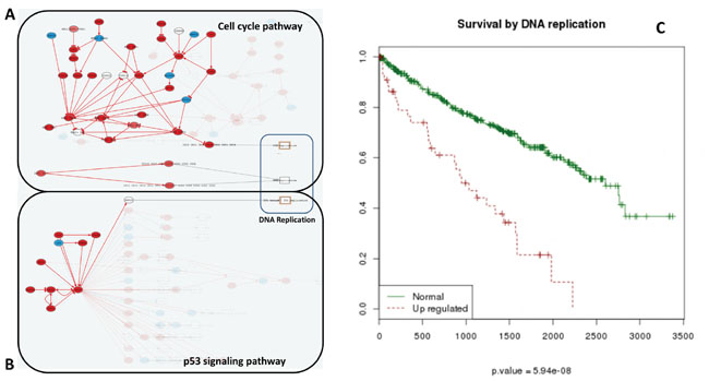 Increase of DNA replication activity is related to bad prognostic.