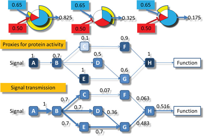 Oncotarget | High throughput estimation of functional cell