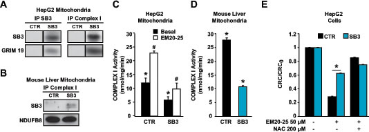 SB3 interacts with respiratory Complex I and inhibits its enzymatic activity.