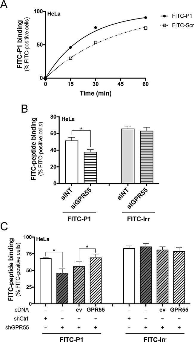 FITC-peptide-P1 binding to GPR55 in Hela cells.