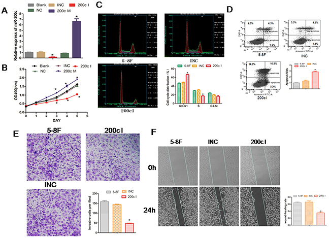 Inhibition of miR-200c expression reduces growth, cell cycle, invasiveness of 5-8F NPC cells and promotes cell apoptosis.