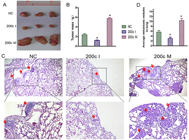 MiRNA-200c accelerates tumour growth and increases the distal pulmonary metastases in vivo.