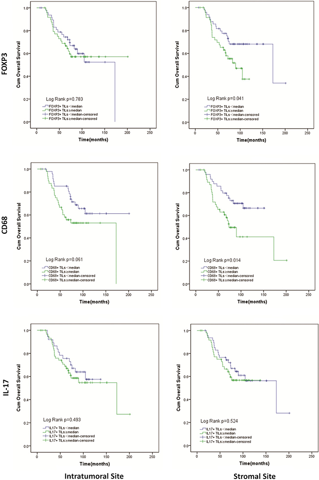 Kaplan-Meier curves of overall survival according to infiltration of FOXP3+ Tregs, CD68+ Mφ, IL-17+ Th17 in intratumoral and stromal sites.