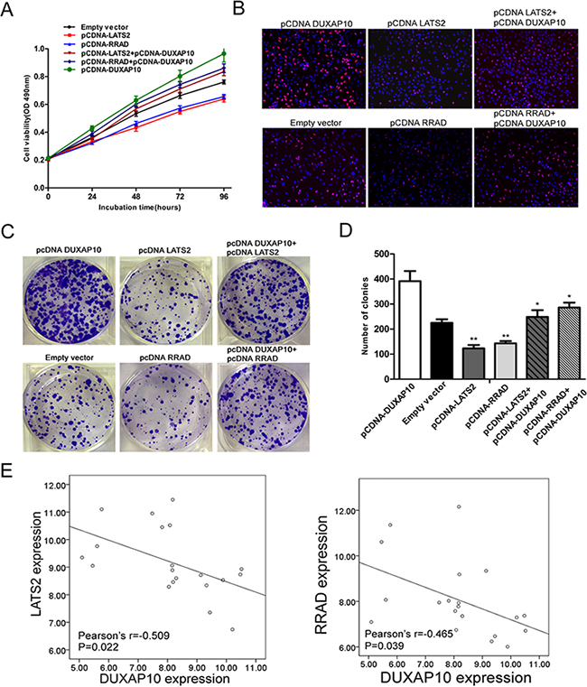 DUXAP10 negatively regulates expression of LATS2 and RRAD by rescue assays.