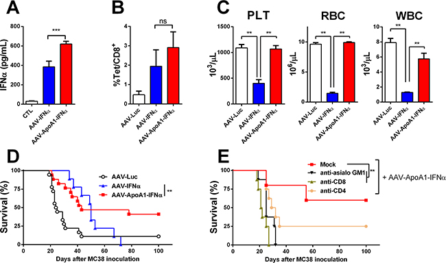 AAV-ApoA1-IFNα is able to eradicate tumors without lethal toxicity.