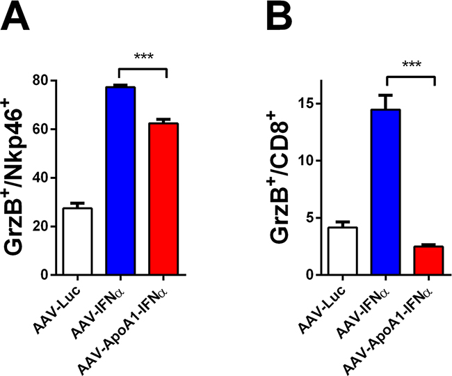 Defect in long-term CD8+ T cell activation after AAV-ApoA1-IFNα in mice.