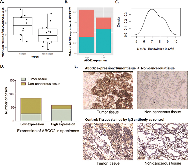 Biostatistics analysis of NCBI database and IHC examination show highly ABCG2 expression in GC patients.
