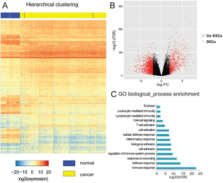 Identification and analysis of differentially expressed genes (DEGs).