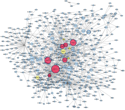 Protein Protein interaction network among up–regulated genes detected in co-cultured keratinocytes and melanocytes from individuals harbouring Red hair color MC1R variants (GSE44805 dataset).