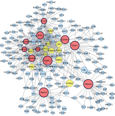 Hub genes and their first connected genes from network detected among down-regulated genes in co-cultured keratinocytes and melanocytes from individuals harbouring Red hair color MC1R variants (GSE44805 dataset).