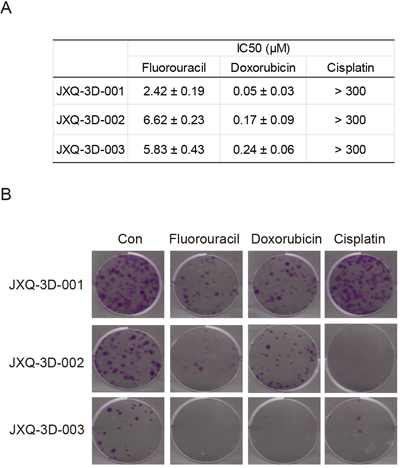 The sensitivities of three GSC PDCs to chemotherapy drugs for tumor of biliary tract.