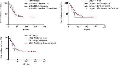 Kaplan–Meier analysis of patients with high vs. moderate+low expression of Notch1, Jagged1 and NICD.