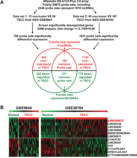 Dysregulated lncRNAs expression analysis using two independent TSCC cohorts and cDNA microarray analysis.