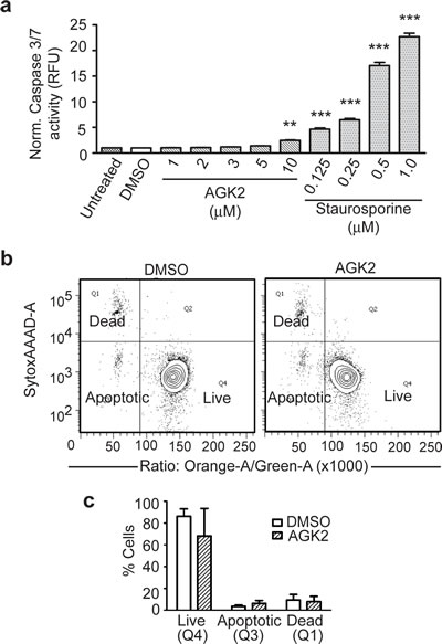 SIRT2 Iinhibition With AGK2 Does Not Induce Significant Apoptosis.