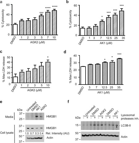 SIRT2 Inhibition Causes Release of LDH and HMGB1 from Merlin-Mutant MSC.