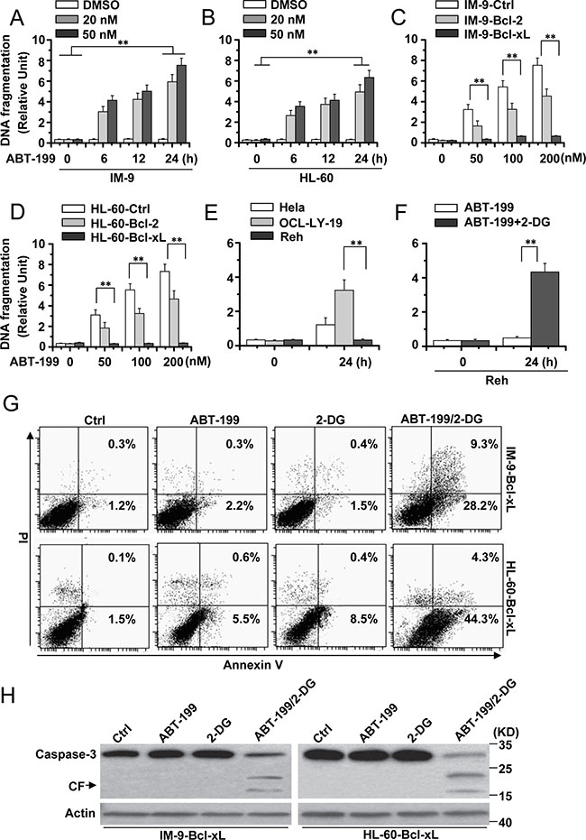 2-DG combined with ABT-199 induces cell apoptosis in hematopoietic cancer cells with excessive Bcl-xL expression.
