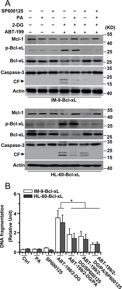 Mcl-1 expression and JNK activation is required for cell apoptosis.
