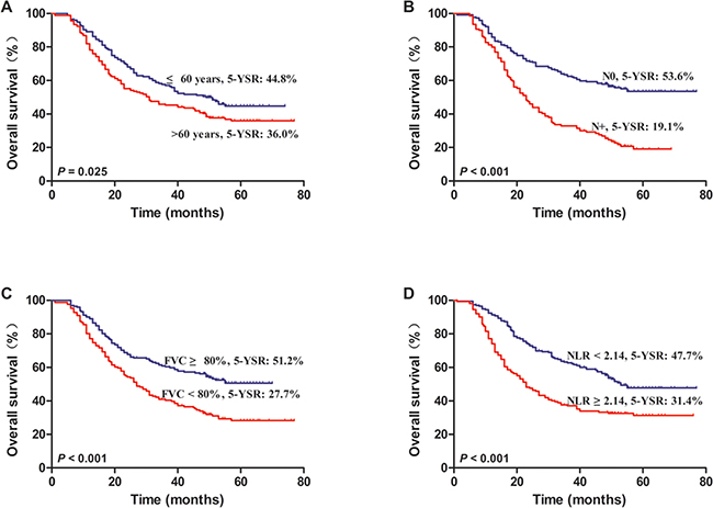 Kaplan–Meier survival curves for NSCLC patients after lung resection.
