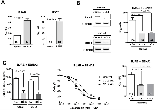 CCL3 and CCL4 contribute to doxorubicin resistance in DLBCL cells.