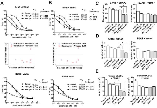 Inhibition of Btk or NF-κB sensitizes lymphoma cells to doxorubicin.