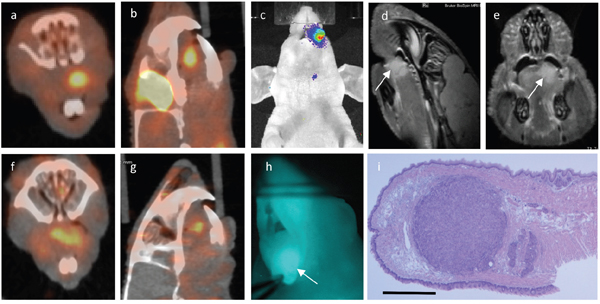 Multimodality imaging: Same animal with a 1.66 millimeter large tumor in the left anterior tongue subjected to 18FDG-PET a, b. uPAR-PET f, g. BLI c. MRI d, e. white arrow marking tumor) and uPAR NIRF imaging h. in vivo.