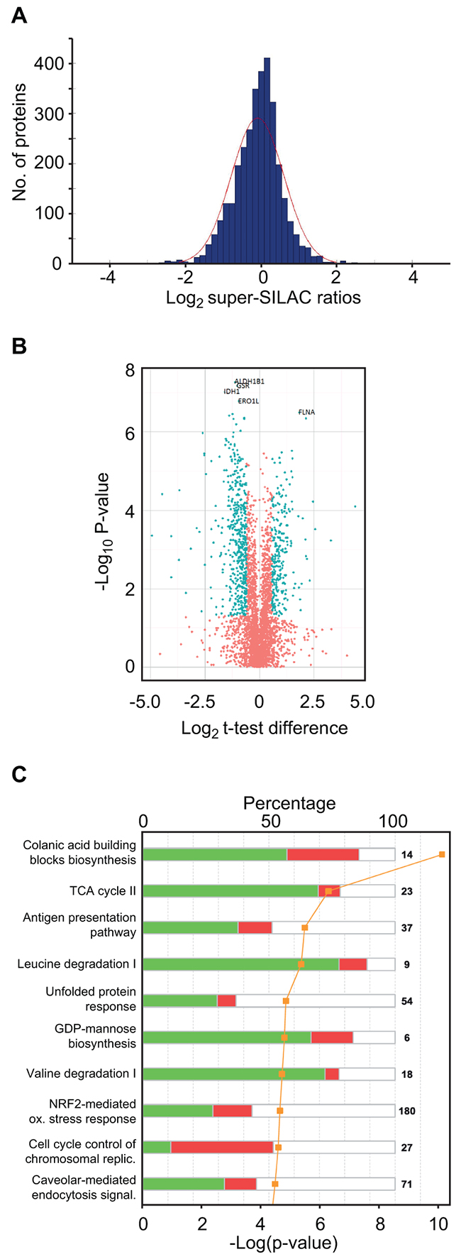 Super-SILAC quantitative profiling and pathway analysis of differentially expressed proteins.