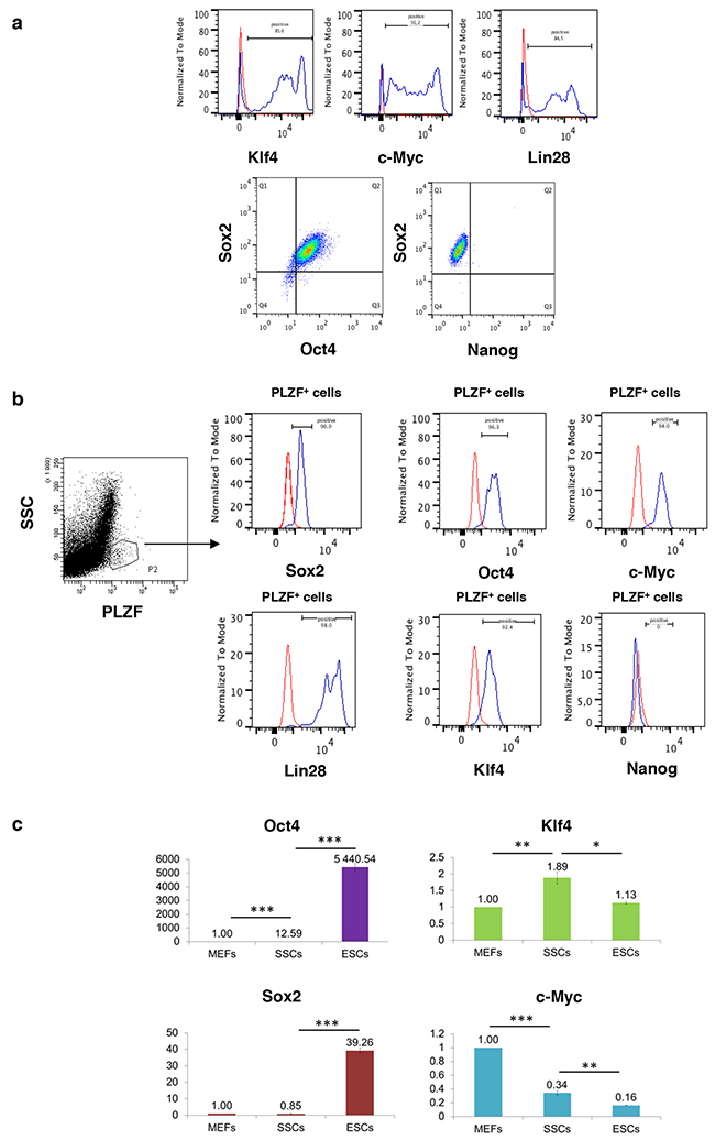 3e6f9124b3a64f Reprogramming factors that induce pluripotency are expressed in  spermatogonial progenitors except Nanog.
