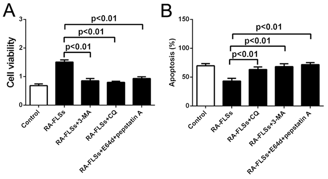 Autophagy inhibitors could effectively inhibit the immune activation function of RA-FLSs.