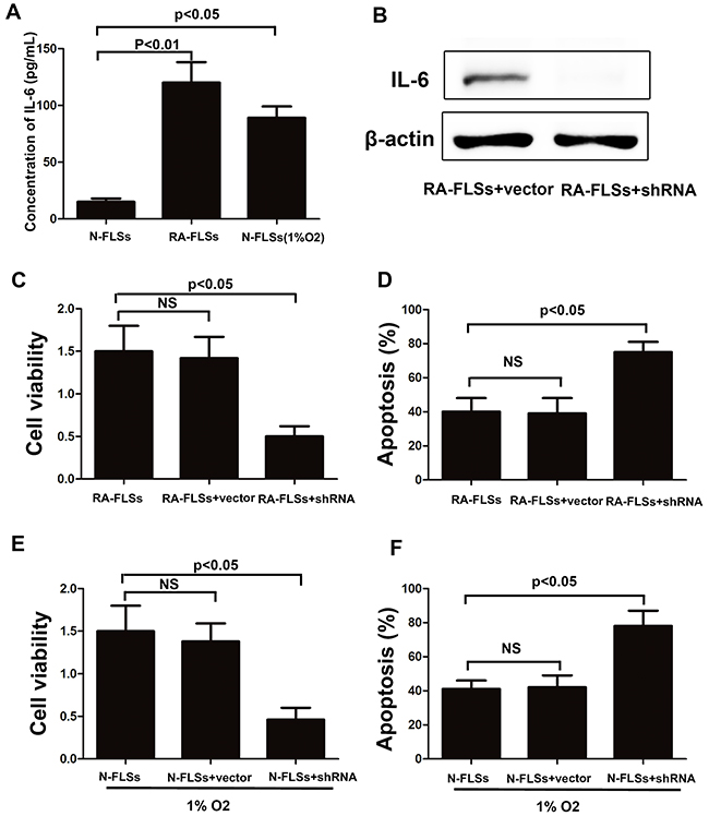 The expression of IL-6 was up-regulated not only in RA-FLSs but also in the fibroblasts that treated with hypoxia condition.