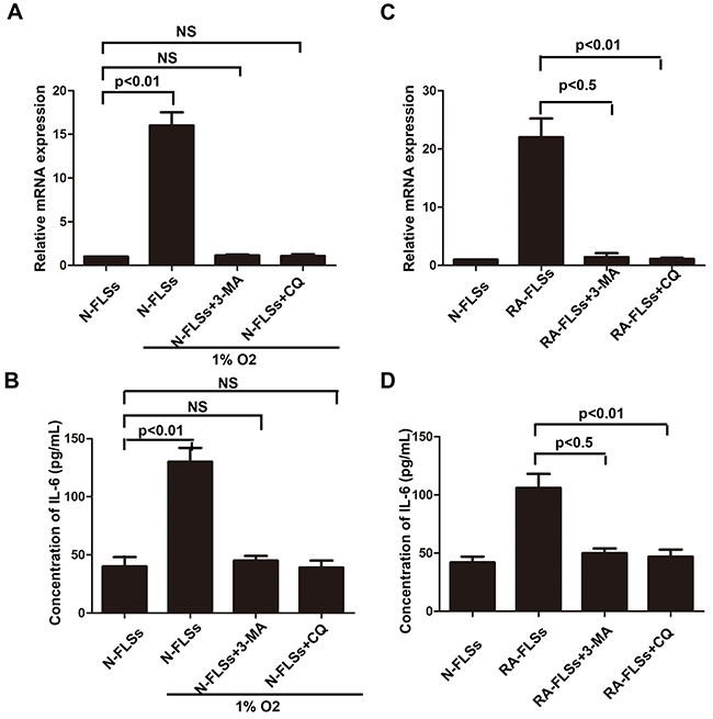 Autophagy mediated the up-regulation of IL-6 in RA-FLSs.