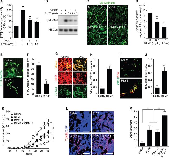RLYE inhibits vascular leakage and enhances tumor chemosensitivity.