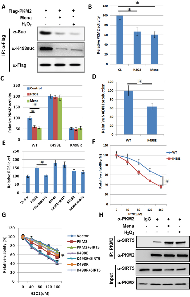Oncotarget | Desuccinylation of pyruvate kinase M2 by SIRT5