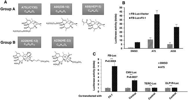Identification of Fli-1 transcription activating compounds.