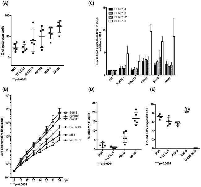 EBV strains transform B cells with variable efficiency.