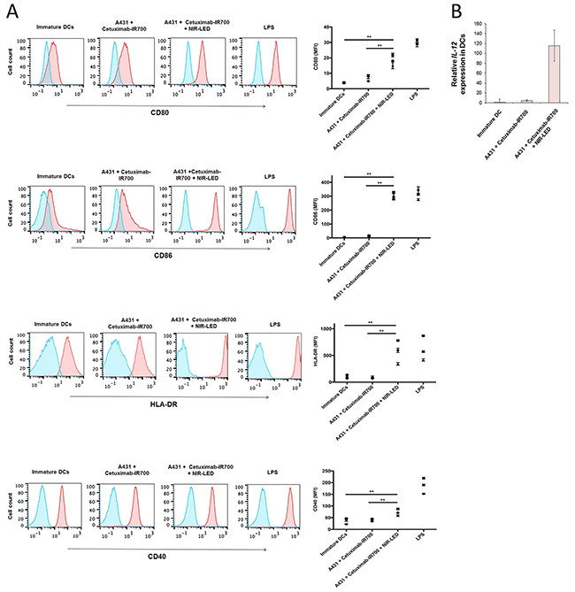 NIR-PIT induced ICD promoted maturation of co-cultured immature dendritic cells.