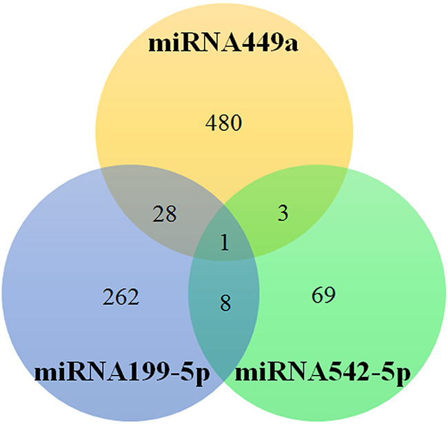The number of target genes of miRNA449a, 199-5p and 542-5p.