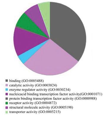 GO analysis of target gene functions.