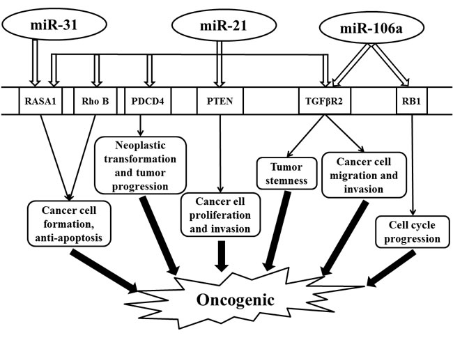 Schematic illustrating the oncogenic effect regulated by miR-31, miR-21, and miR-106a in colorectal cancer.