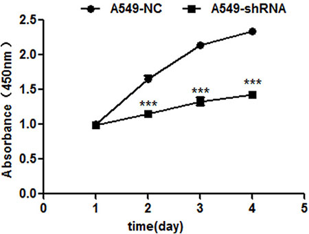 B7-H4 shRNA inhibits cell proliferation by CCK-8 assay 1–4 days.