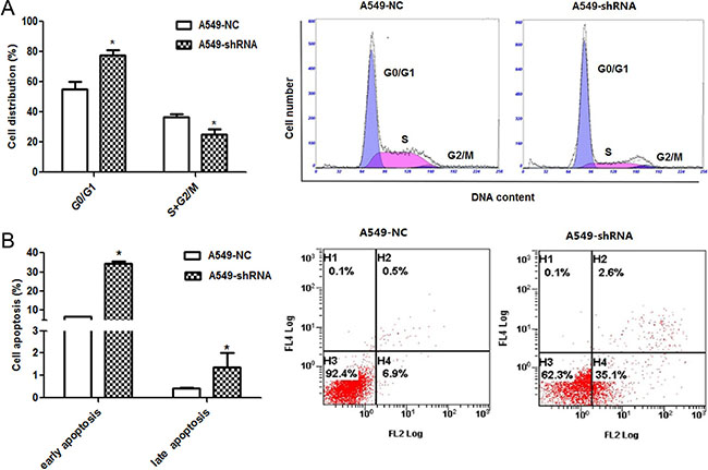 Effect of B7-H4 shRNA on cell circle distribution and apoptosis in A549 cells.