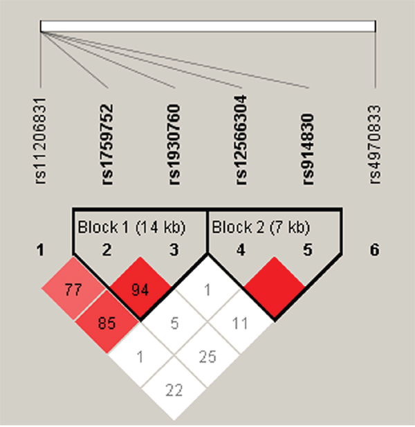 Haplotype block map for all the SNPs of the PPAP2B gene.
