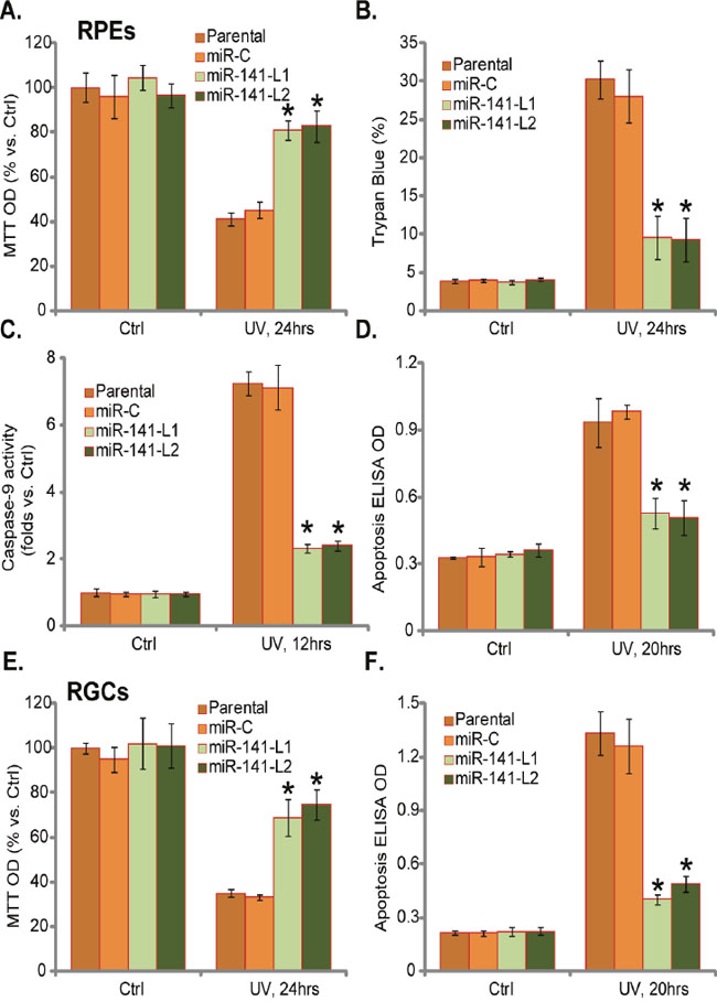 miR-141 expression protects RPEs and RGCs from UV.