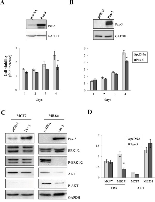 Pax-5 attenuates breast cancer cell growth.