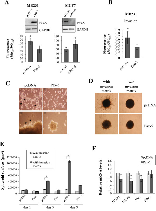 Pax-5 suppresses breast cancer cell malignant features.