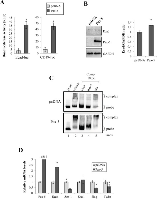 Pax-5 induces E-cadherin expression in breast cancer cells.