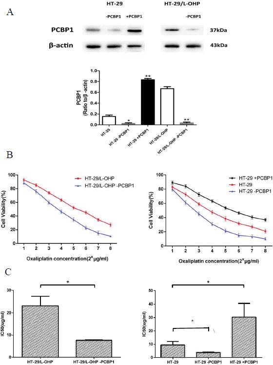 PCBP1 increased L-OHP resistance in HT-29 cells.