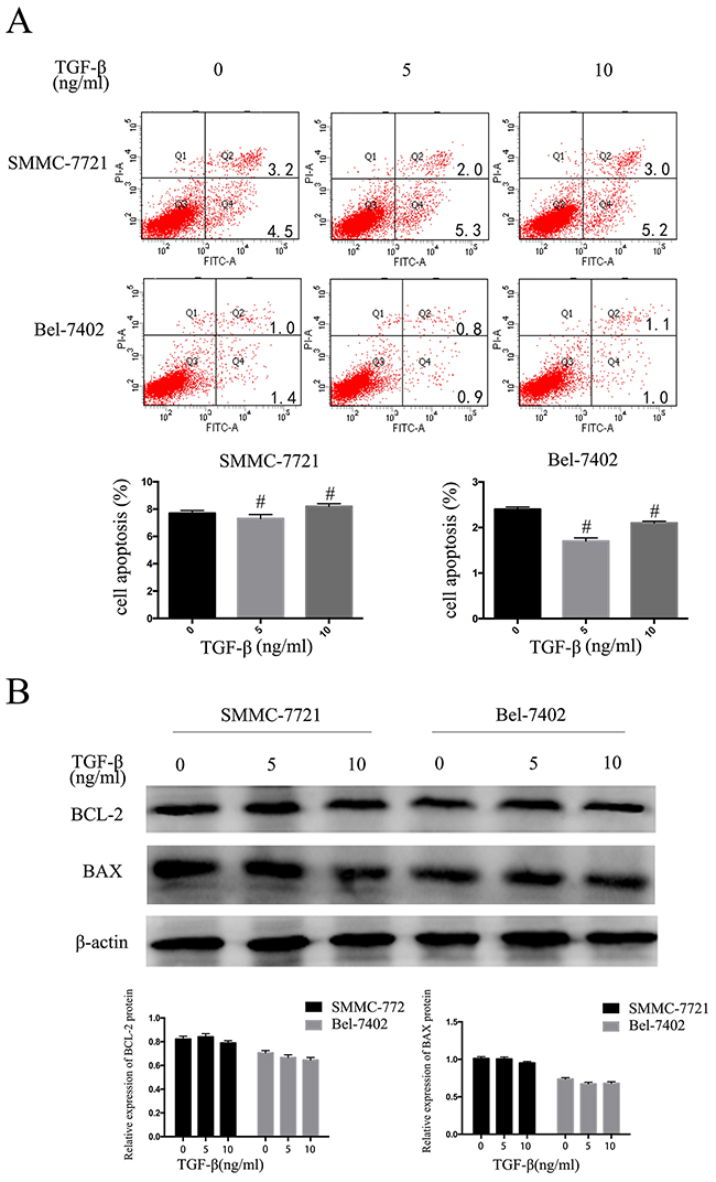 TGF-β1 suppresses the HCC cells proliferative capacity but does not promote apoptosis.